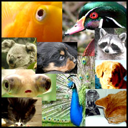 Photo Collage of Animals