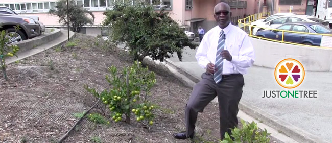 Just One Tree – SF Juvenile Justice Center Lemon Tree Project